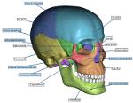 skull50.PNG